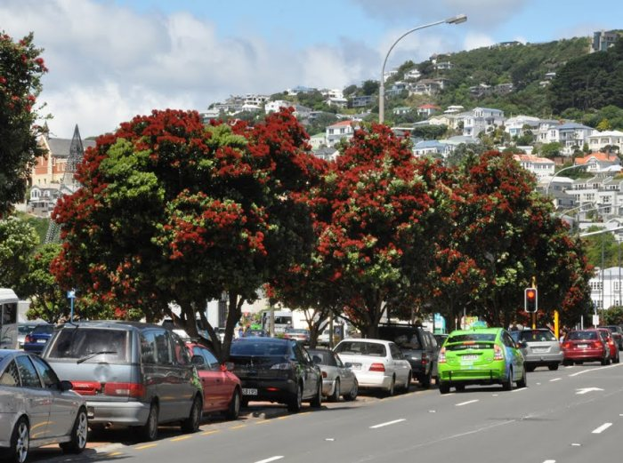 Image result for pohutukawa wellington street