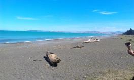 Rarangi Beach (10) 2013