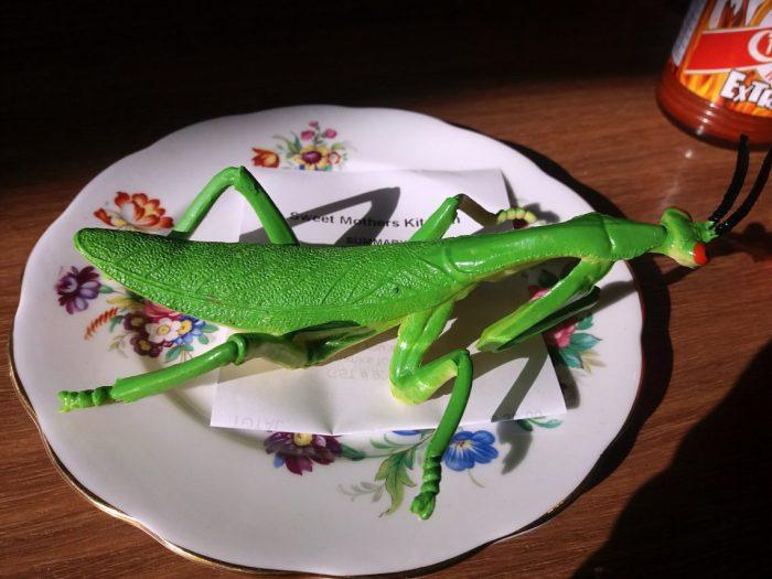 Praying Mantis Check.jpg