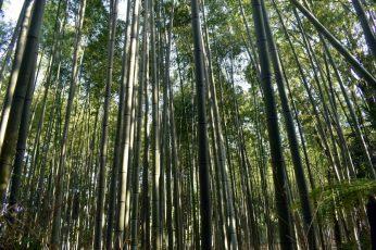 arashiyama bamboo grove 01