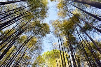 arashiyama bamboo grove 04