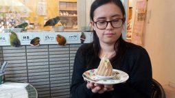 bird cafe 03