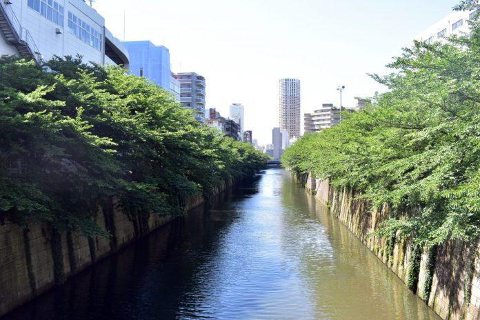 meguro river 01
