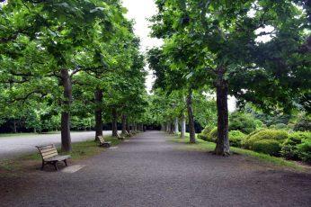 shinjuku garden 08