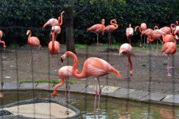 ueno zoo 03