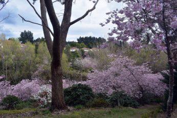 gardens 19